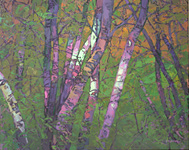 Spring Birches, 40 x 50 inches, oil on canvas